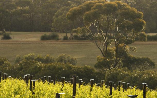 The Islander Estate Vineyards Kangaro Island