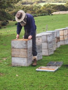 Kangaroo Island Living Honey - Apiarist Shawn Hinves